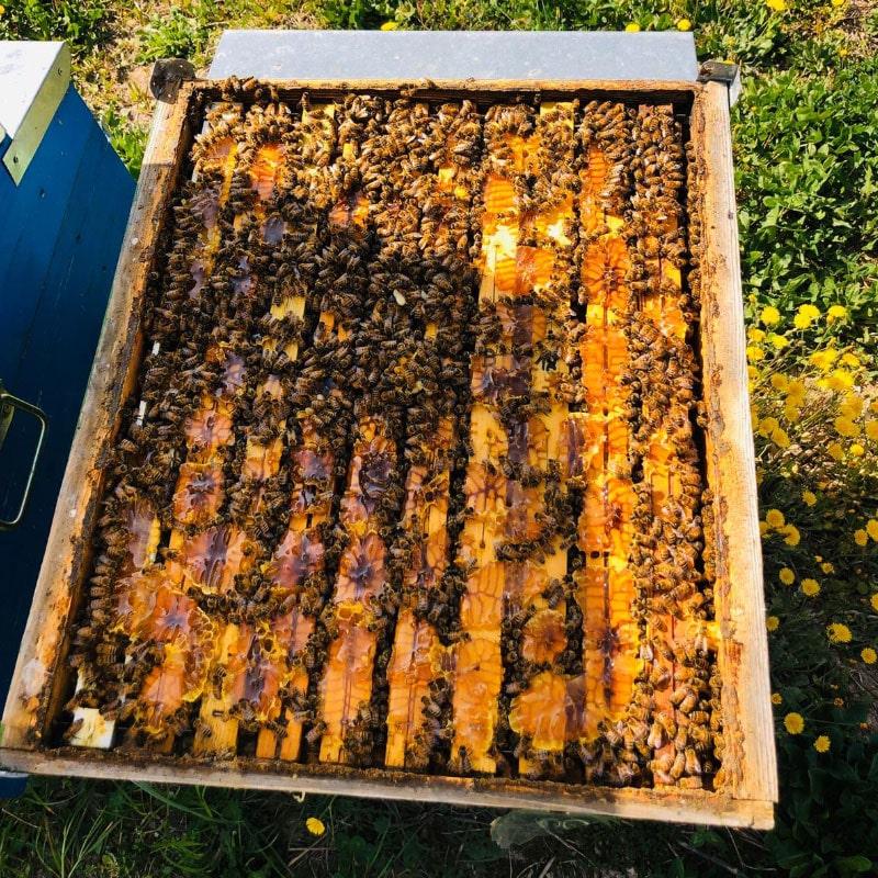 api che lavorano dentro le arnie