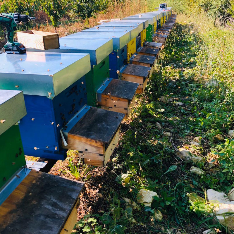 le api lavorano presso le arnie di apicoltura burato